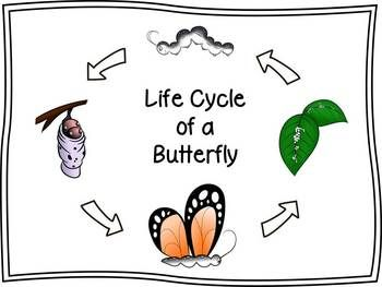 Butterfly Life Cycle Clip Art Butterfly Life Cycle Clip Art Life Cycles
