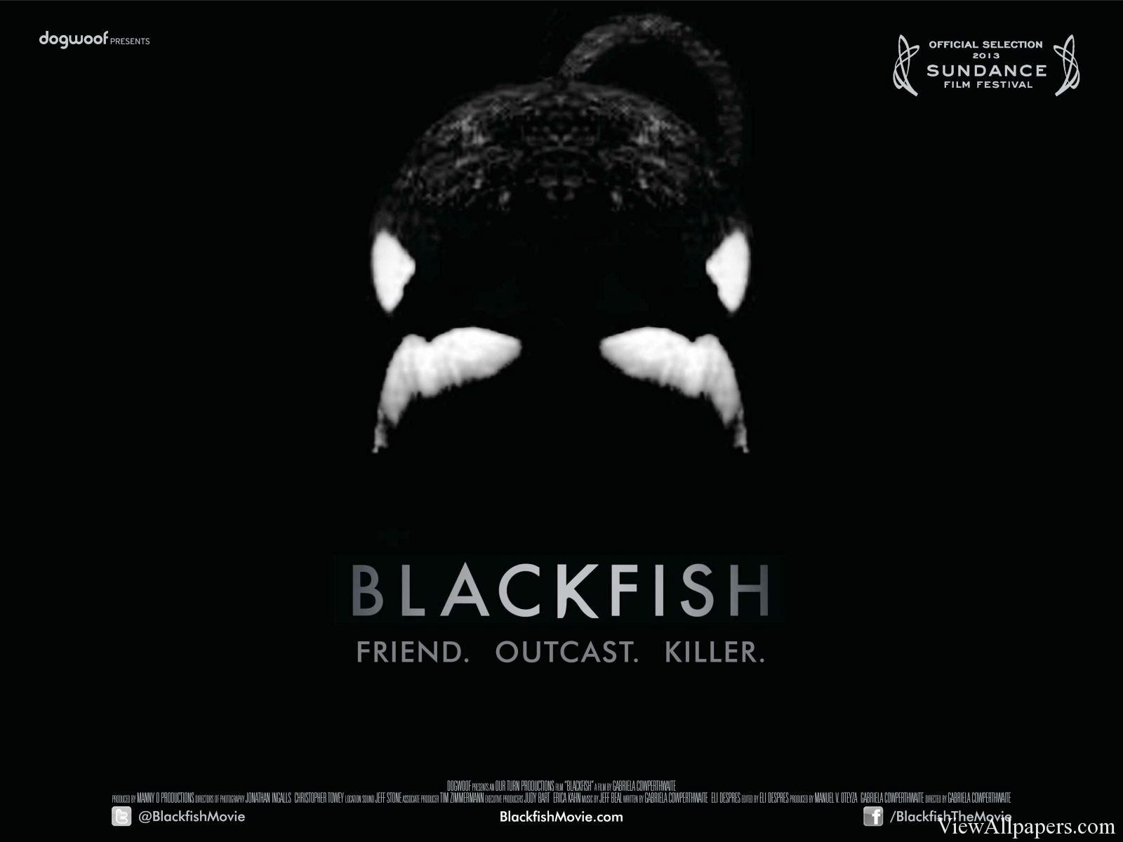 Black Fish Documentary HD Wallpaper