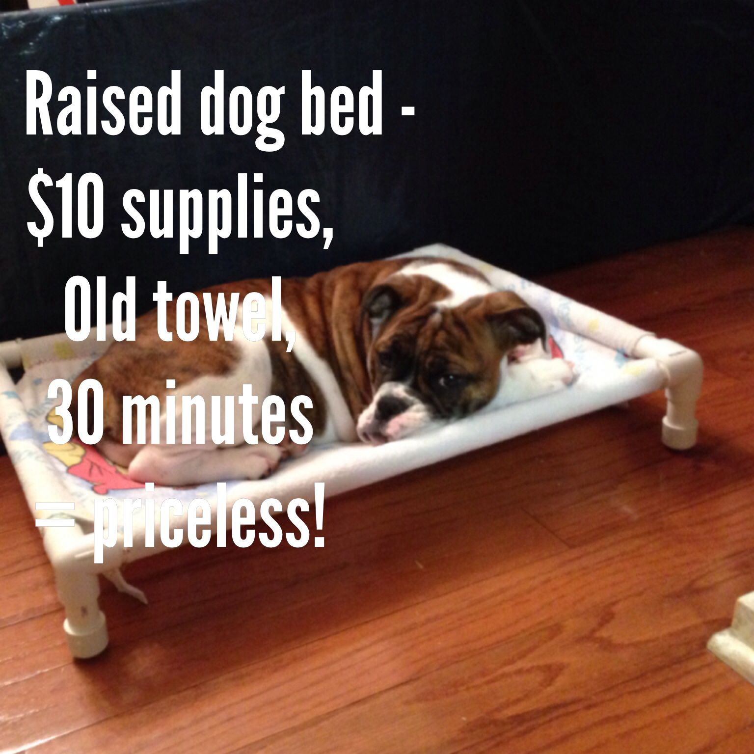 Do it yourself raised dog bed with pvc piping and an old towel do it yourself raised dog bed with pvc piping and an old towel solutioingenieria Gallery