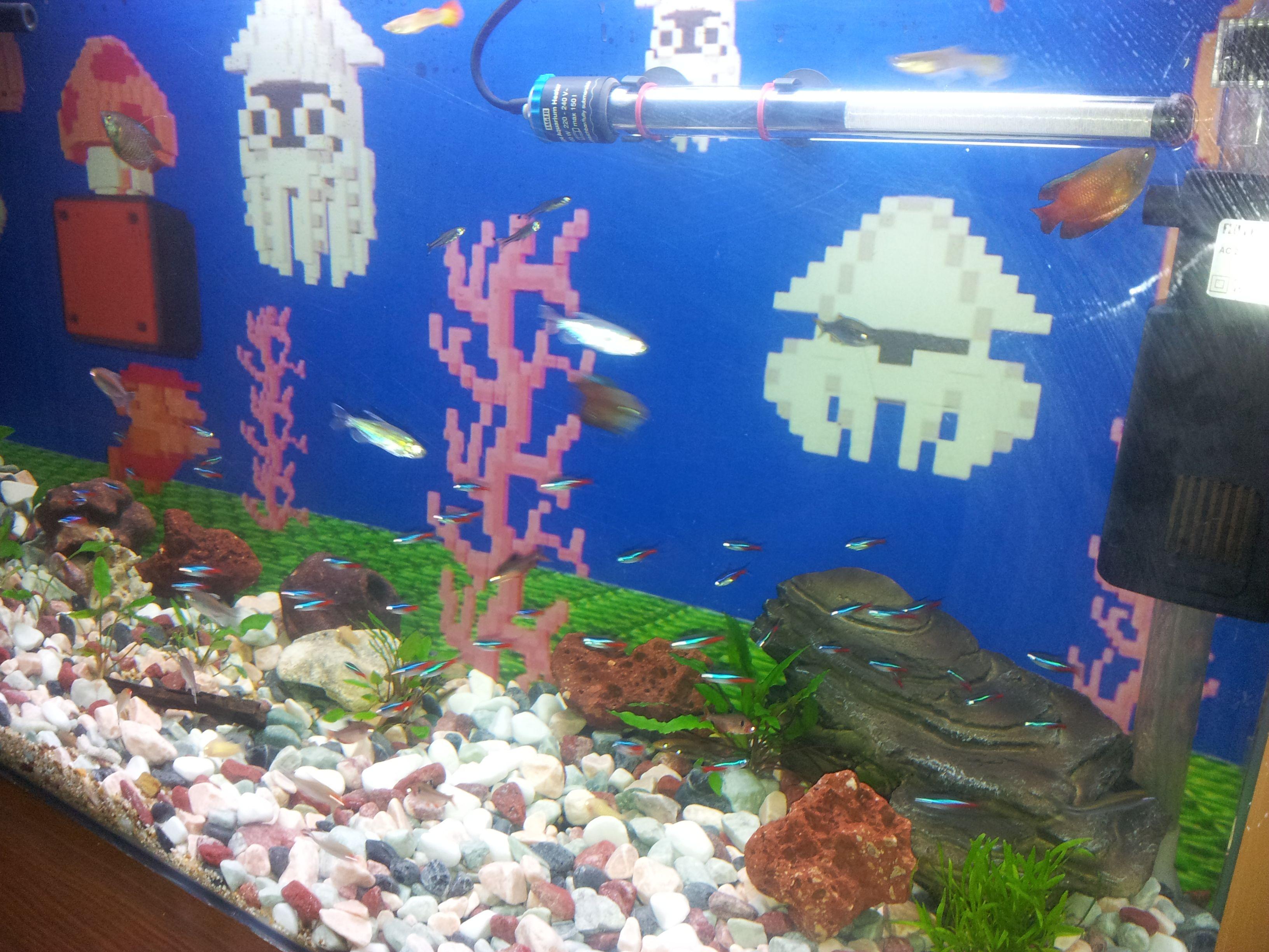 Mario Brothers Aquarium Decorations Super Mario Water Level Themed Background Close Up Shot Fish