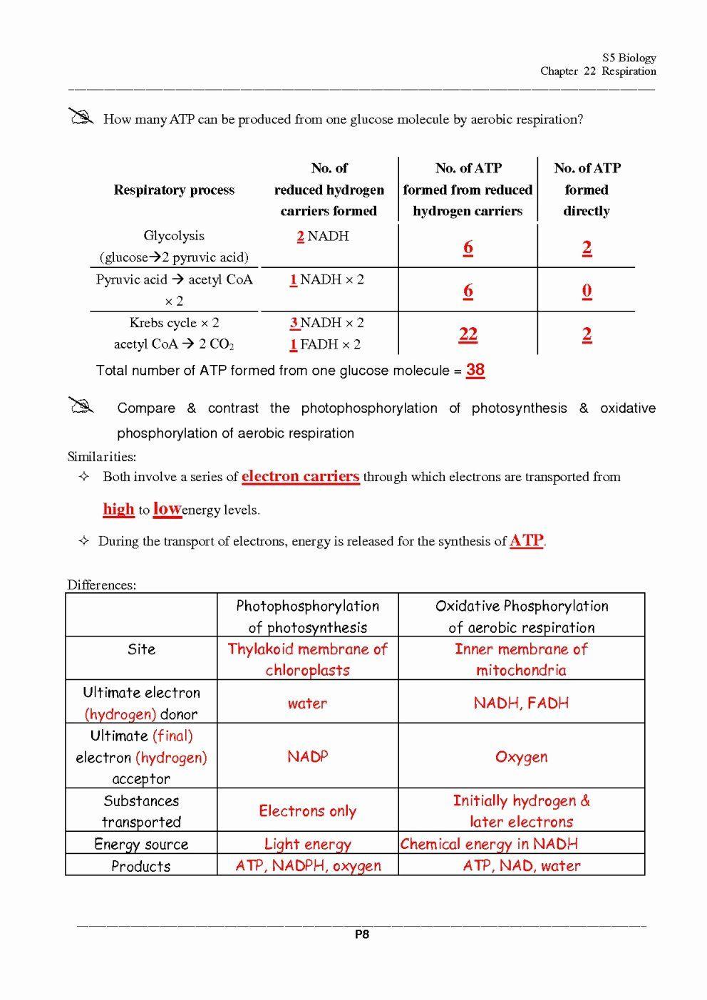 Cellular Respiration Worksheet Answer Key Luxury Cellular Respiration Worksheet Answers Che In 2020 Biology Worksheet Persuasive Writing Prompts Cellular Respiration