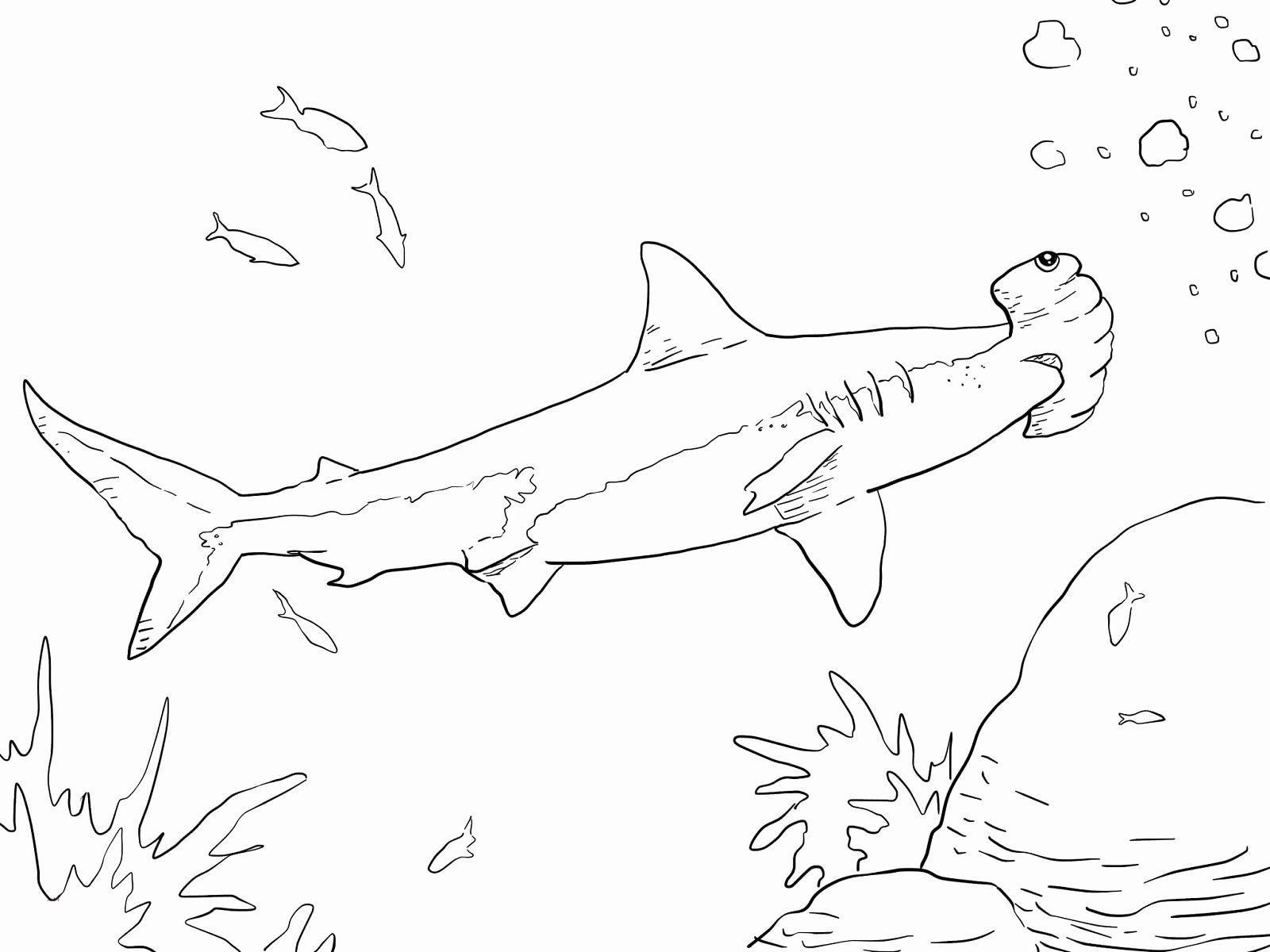 Hammerhead Shark Coloring Page Inspirational Coloring Pages Hammerhead  Sharks Food Ideas in 2020 | Shark coloring pages, Shape coloring pages, Bee coloring  pages