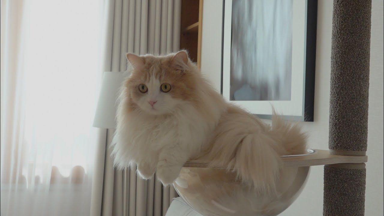 Quel Chat A Fait CA ? Pff… (FR SUB) Cats, Kitty, Animals