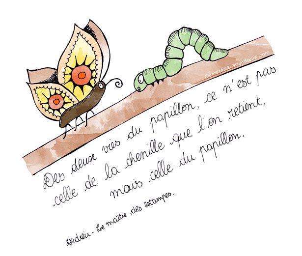 Citation papillon des deux vies du papillon ce n 39 est pas - Que mange les papillons de nuit ...