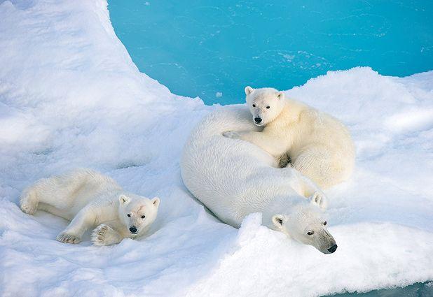 Nuevo estudio advierte que la temperatura terrestre aumentará dos grados antes de fin de siglo
