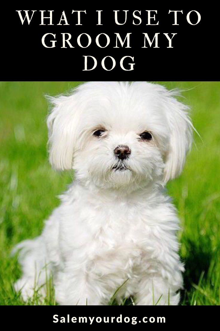 Top 10 Dog Breeds That Don T Shed Maltese Dog Breed Maltese Puppy Low Maintenance Dog Breeds