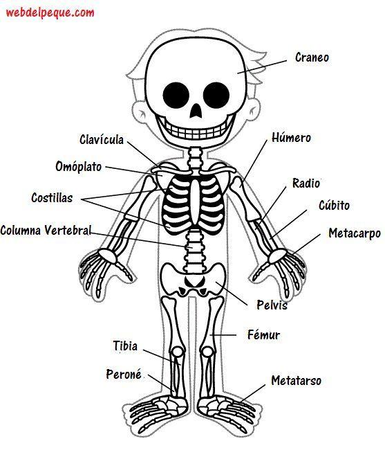 Resultado de imagen para dibujos de los huesos del cuerpo humano ...