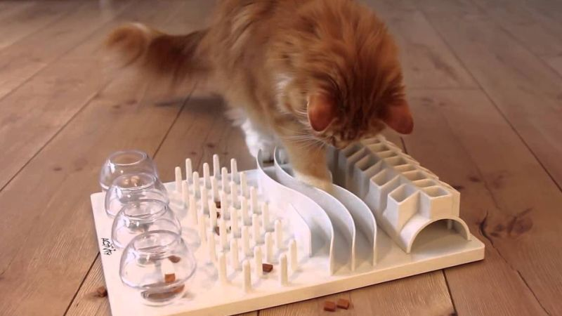 Cats Are Happier And Healthier When You Make Them Work For Their Food Cat Care Cat Activity Cat Puzzle
