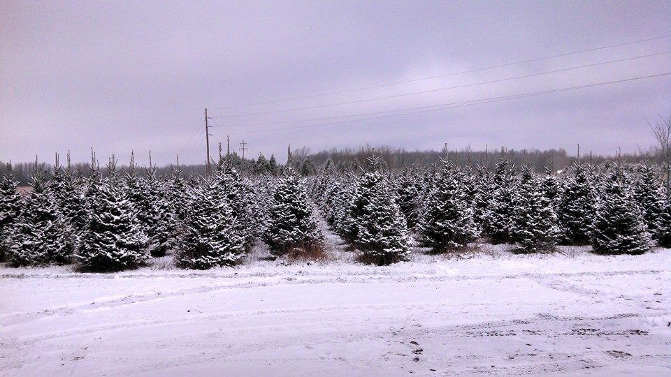 Christmas Tree Farm Michigan Swan S Christmas Tree Farm Christmas Tree Farm Tree Farms Christmas Tree