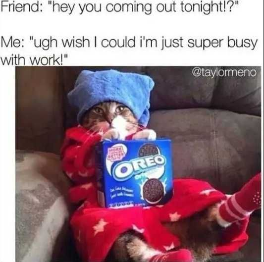 36 Memes To Get Your Day Started Off With A Laugh Funny Animal Pictures Funny Pictures Funny