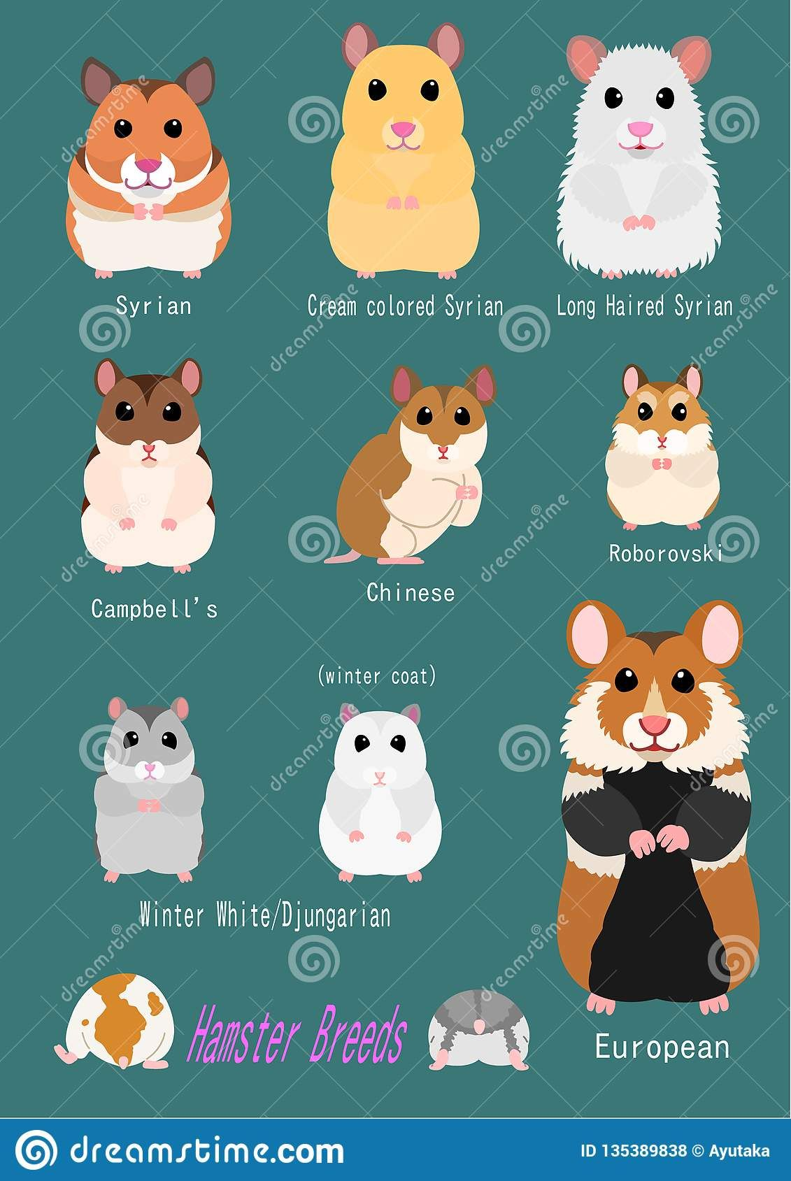 Illustration About Collection Of Hamster Breeds Various Breed Front Side With Breed Name Illustration Of European Hamster Breeds Pet Rodents Cute Hamsters