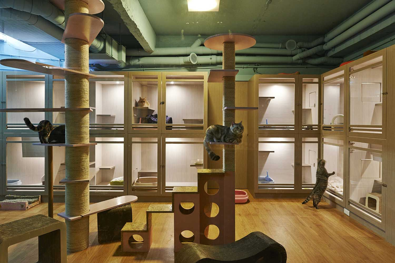 Product Design & Architecture for Pets Cat hotel, Pet