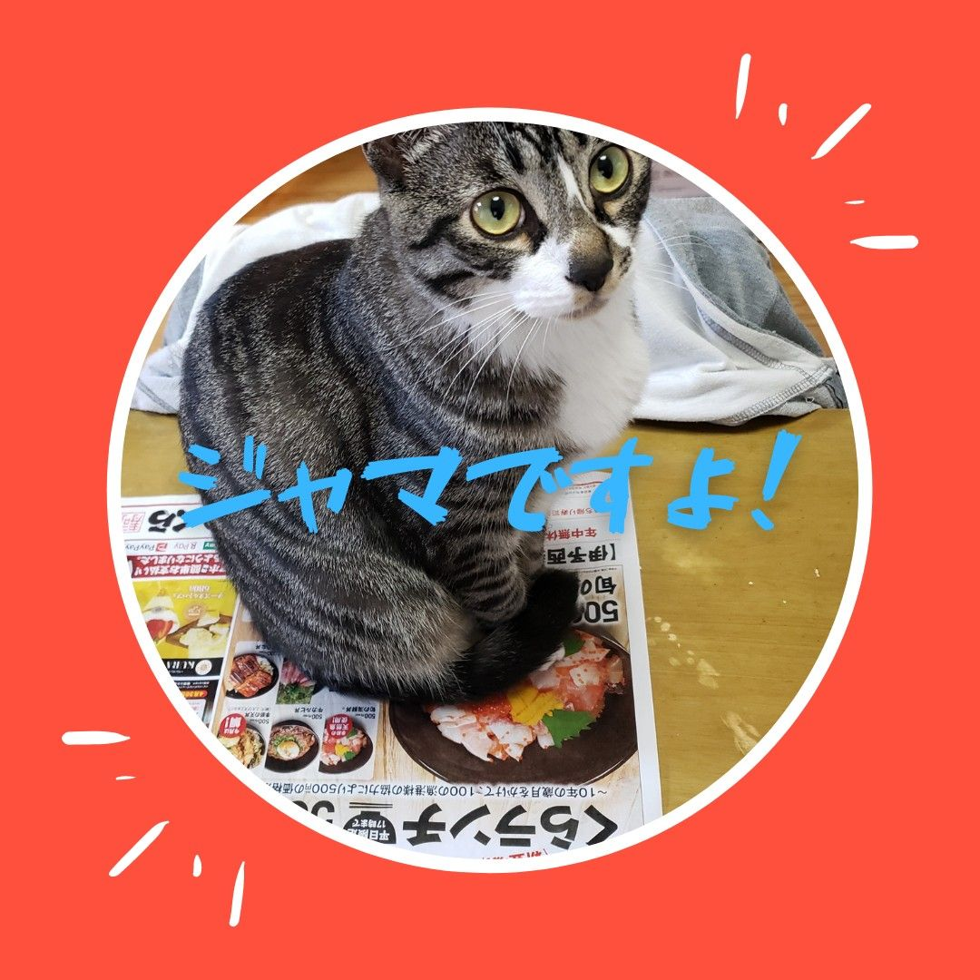 猫が新聞の上に乗る理由 猫 ペット 新聞
