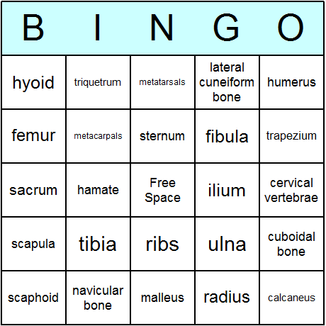 human skeleton bingo card | anatomy | pinterest | human skeleton, Skeleton