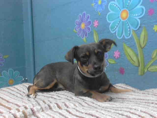 www.PetHarbor.com pet:LACO3.A4643445