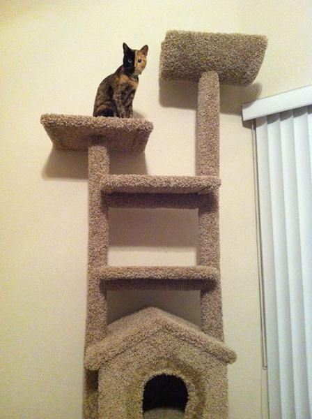 two-faced-chimera-cat-venus-38.jpg