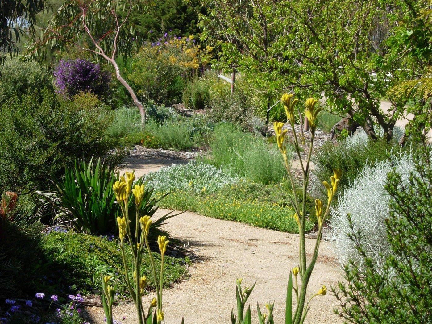 large drought tolerant native garden