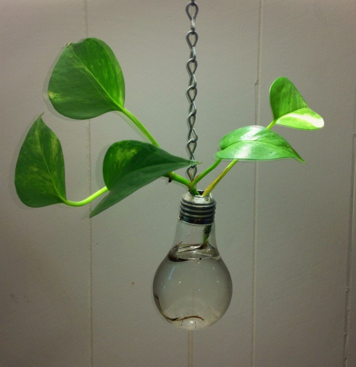 Recycled Light Bulb Hanging Vase