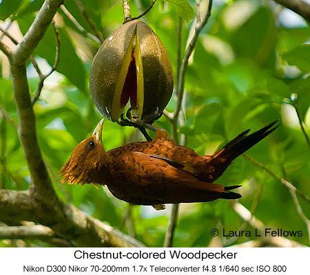 Exotic Birds Rainforest   Tropical Rainforest Birds on Exotic Birding Tours Photographing ...