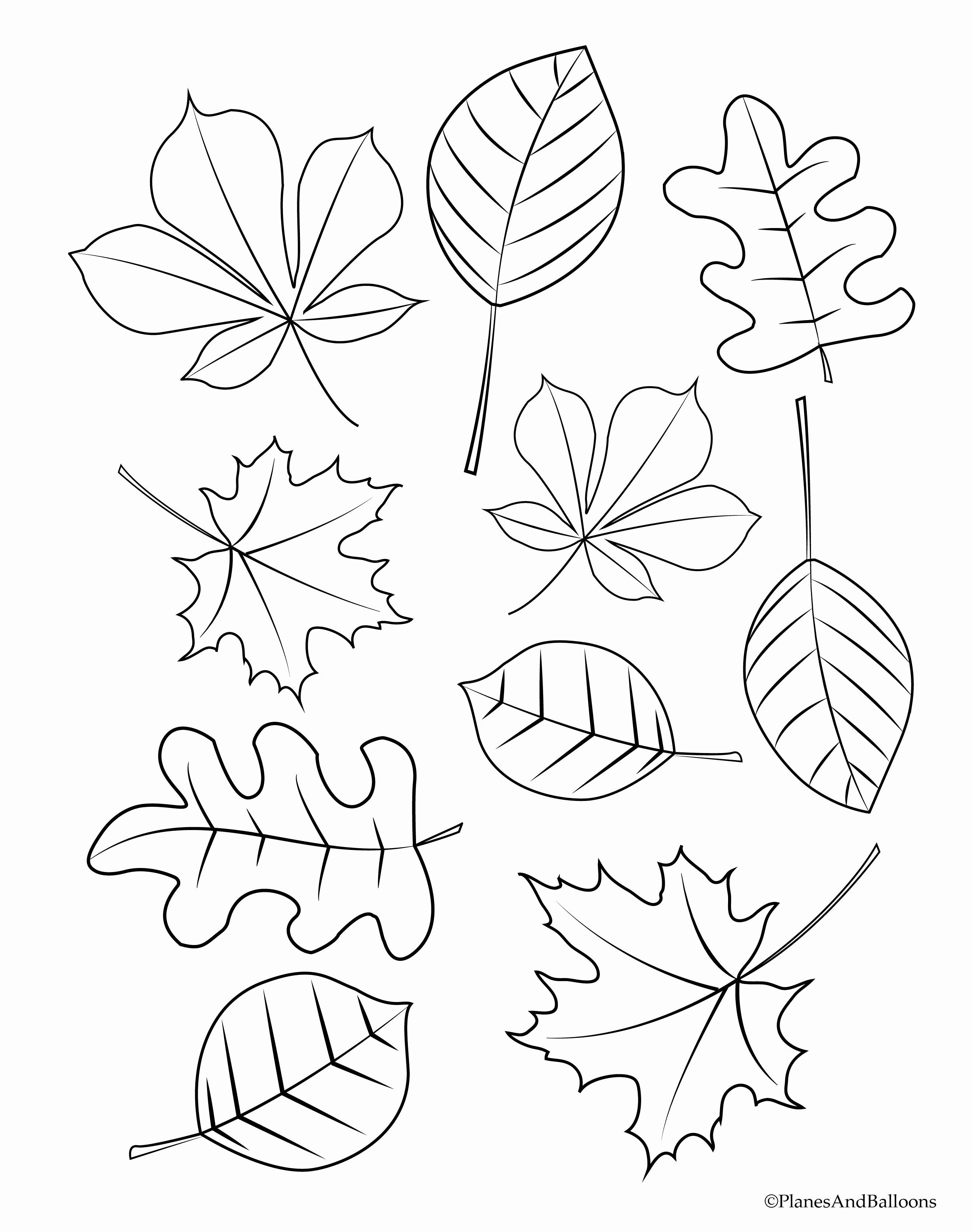 Tree Leaf Coloring Pages Beautiful Coloring Books 70 Fall Leaves Coloring Sheet Ideas Fall Coloring Sheets Leaf Coloring Page Fall Leaves Coloring Pages