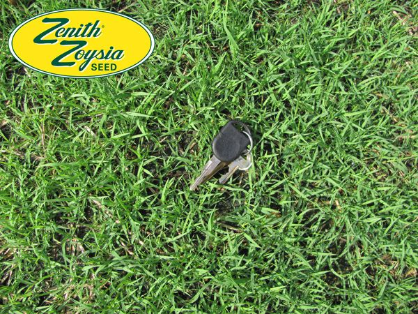 Tifblair Centipede And Zenith Zoysia Take About The Same Amount Of Time To Germinate 21 28 Days With Soil3 Organic Humus Com Grass Seed Seedlings Tall Fescue