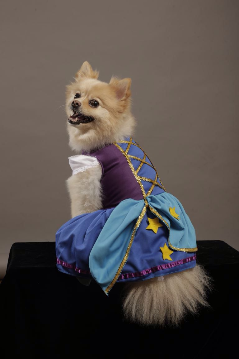 Look At Me Zoe Loves How She Looks In Her Gypsy Princess Dog