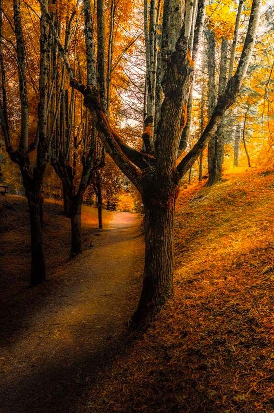 Forest Tree Landscape Nature Fall Pictures Autumn Scenes Nature Photography