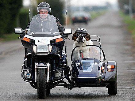 motorcycle sidecar dog