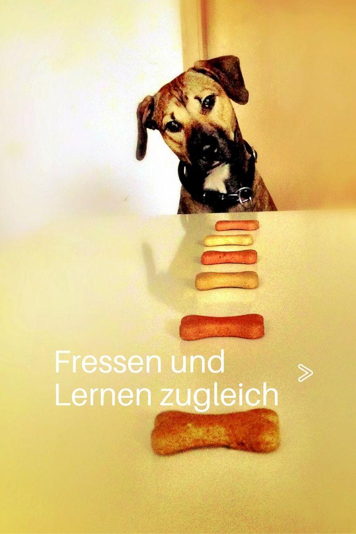 Fressen und Lernen zugleich Beschäftigung für hunde