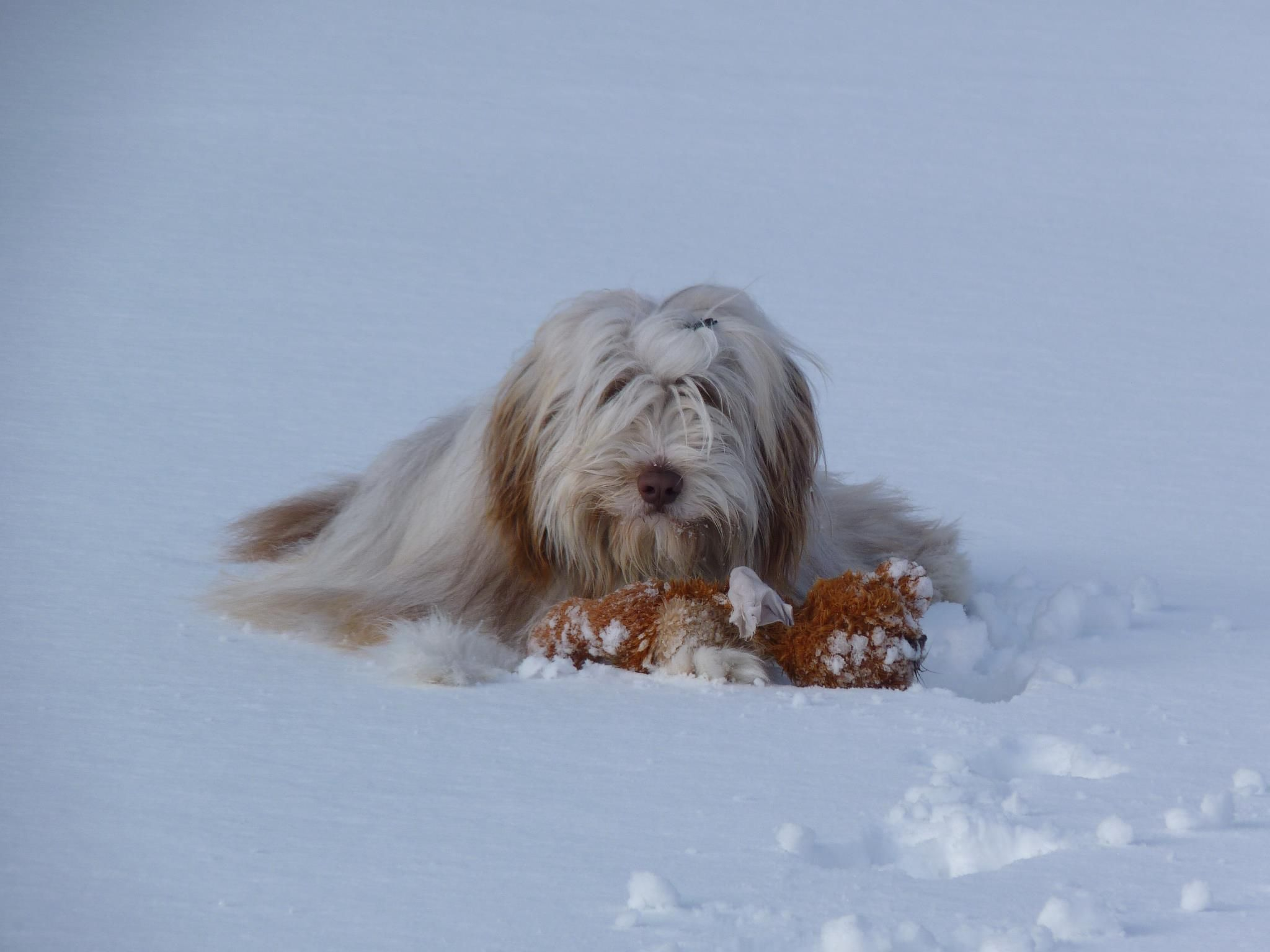 My pup Urho all grown up. Enjoying a teddy meal on the frozen lake.