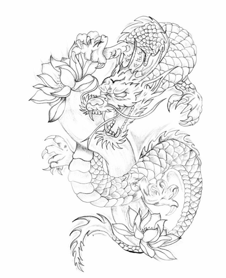 Dragon Outline Drawing : dragon, outline, drawing, OASIS, TATTO, STUDIO, Tatuaże, Dragon, Tattoo, Colour,, Outline,, Stencil, Outline