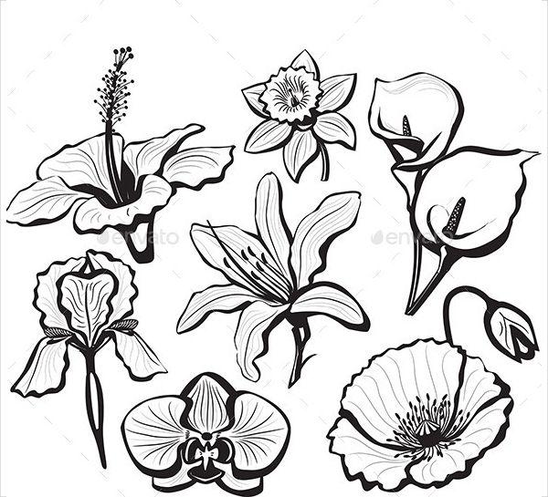 Hibiscus Flower Petal Template Paper Flowers Flower Petal