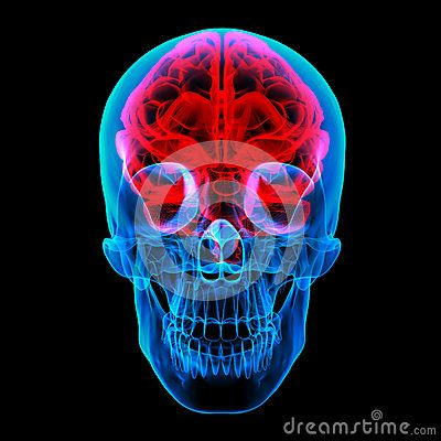 brain diagram front view - Google Search | Skull and bones ...