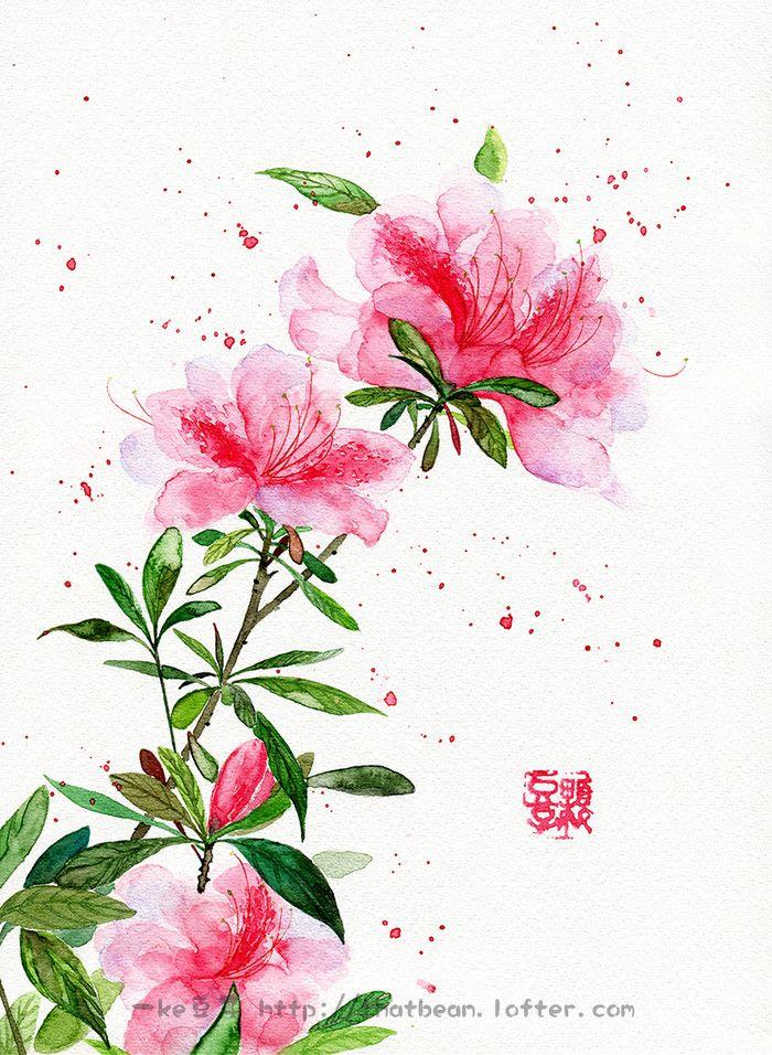 水彩插画——杜鹃-Jessie一颗豆子_原创,水彩,插画,每日一涂,手绘,花卉_涂鸦王国插画