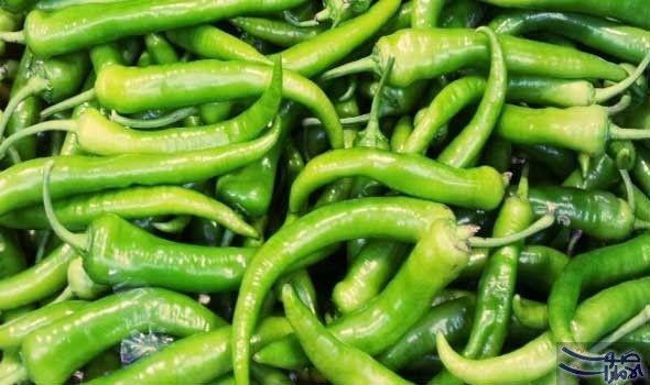 وزارة البيئة السعودية تحظر استيراد ثمار الفلفل حظرت وزارة البيئة والمياه والزراعة في المملكة السعودية مؤقتا استيراد ثمار الفلفل Green Beans Food Vegetables