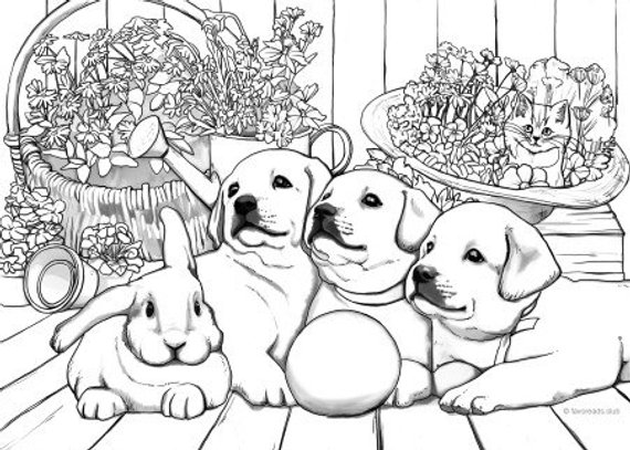 Pin On Cute Animal Coloring Pages