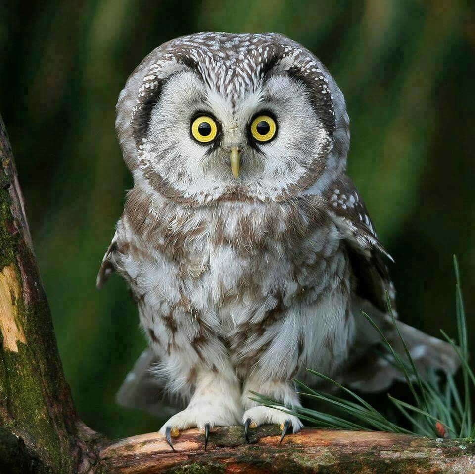 Pin by Fb B on owls Owl pictures, Owl, Owl bird