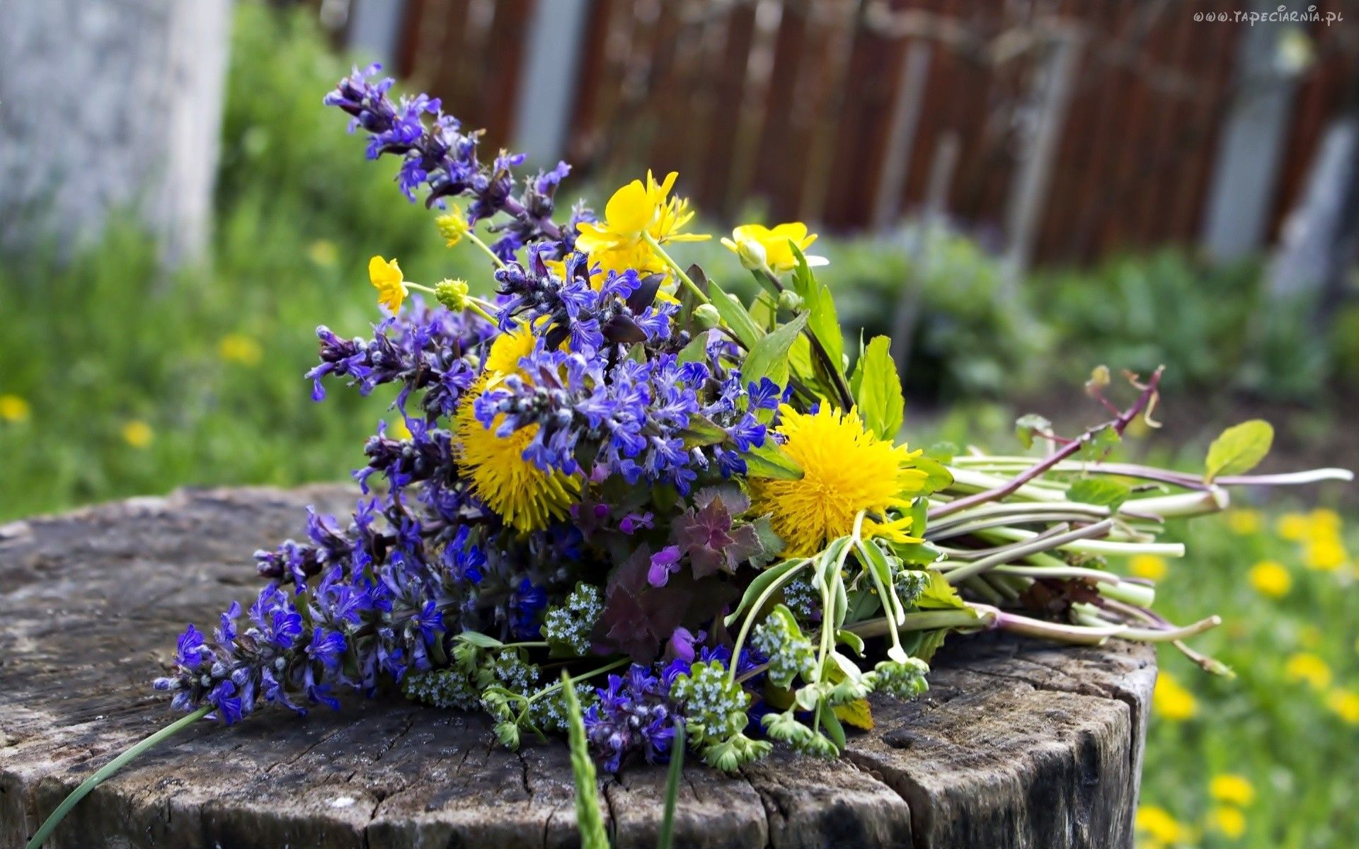 Edycja Tapety Bukiet Polne Kwiaty Mniszek Pien Wildflower Bouquet Wild Flowers Wedding Flowers
