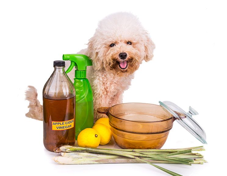 20 Amazing Ways to Use Apple Cider Vinegar for Dogs (6 is