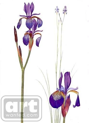 Irises by roy sagarin | ArtWanted.com