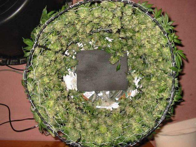 Pin on 420 Grow