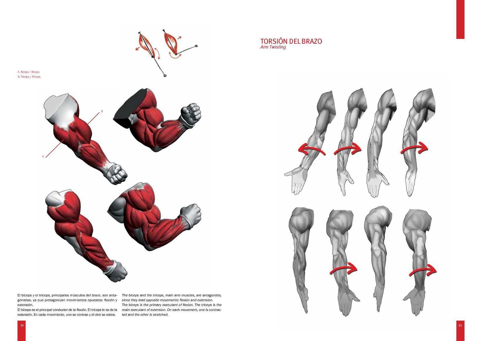 Pin de Zigurat Designs en Anatomía Humana, Poses y Expresiones ...