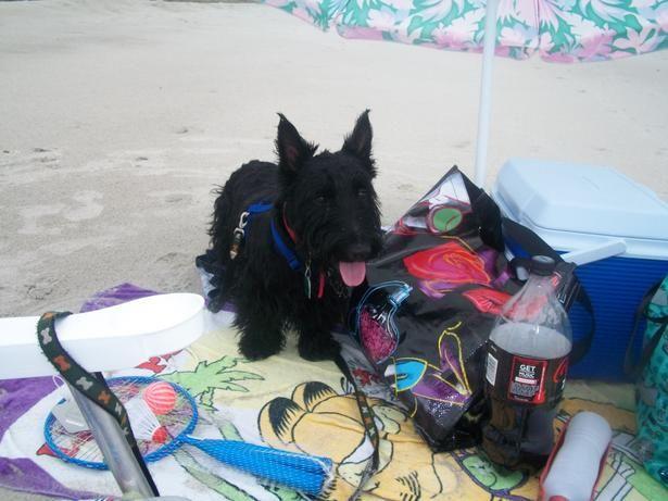 Oak Island Beaches Oak Island Beach Pet Friendly Hotels Dog Friendly Hotels