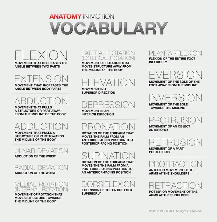 Anatomy words | anatomy | Pinterest | Anatomy, Yoga and Yoga anatomy