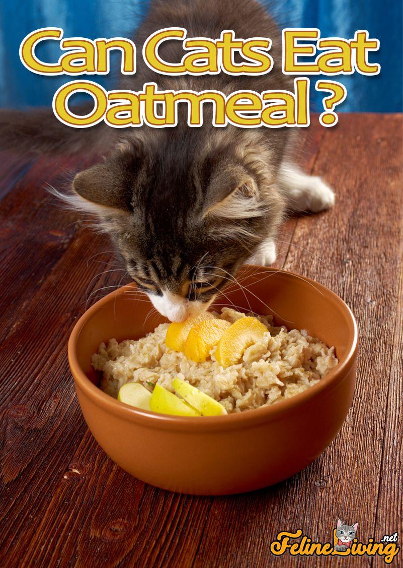 Felineliving Net In 2020 Guilt Free Snacks Oatmeal Snacks Eat