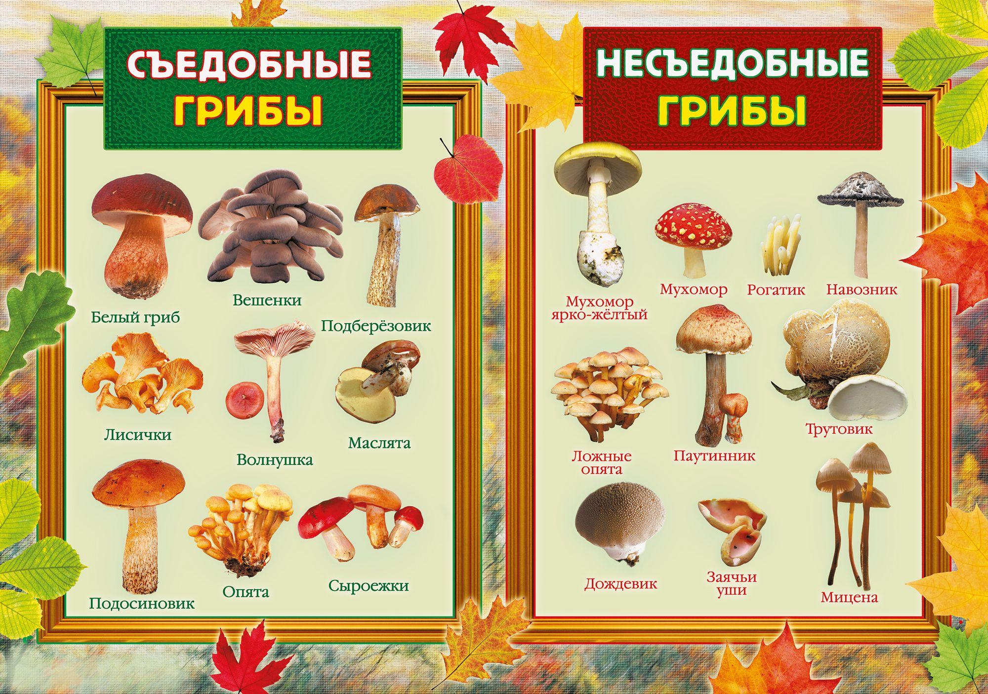 Детям о грибах в картинках с названием