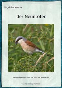 Vogel des Monats: der Neuntöter