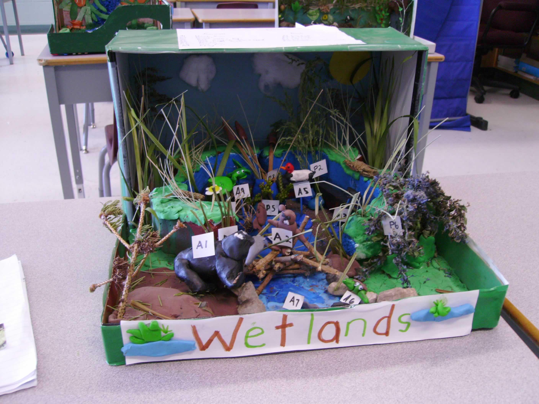 Wetland Shoebox Diorama