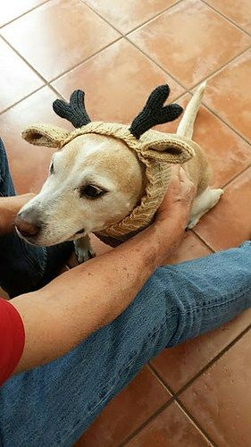 Knitted Dog Hats With Ears Easy Free Patterns Doggy Knits