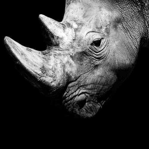 Dark zoo black and white animals photography nicolas evariste photography